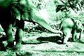 Two Elephants, Dubare Elephant Camp.jpg