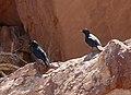Twyfelfontein-Ruffipenne nabouroup (1).jpg