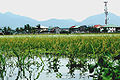 Typhoon Ketsana flooded rice field2.jpg