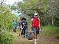 US Army 52396 Volunteers care for the 'aina' in Makua Valley forest gulch.jpg