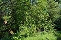 Uelzen - Ilmenau, am Katzenbuckel NIK 6184.JPG