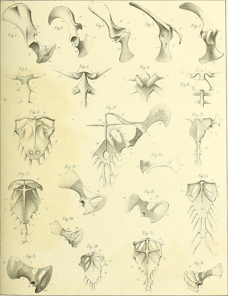 Großartig Wirbeltiere Vergleichende Anatomie Funktion Evolution ...