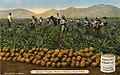 Untitled - Plantations (NBY 9804).jpg