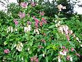 Verge flowers 5b.JPG