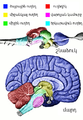 Vertebrate-brain-regions small hy.png