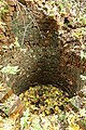 Vestige de cheminée de la mine de fer Bure Saint-Remy Landenne Andenne.jpg