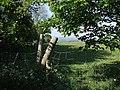 View through a gap - geograph.org.uk - 421825.jpg