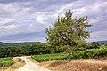 Vignoble AOC Ventoux près de Villars.jpg