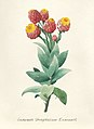 Vintage Flower illustration by Pierre-Joseph Redouté, digitally enhanced by rawpixel 27.jpg