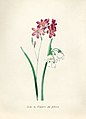 Vintage Flower illustration by Pierre-Joseph Redouté, digitally enhanced by rawpixel 54.jpg