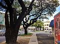 Waikiki - panoramio (3).jpg
