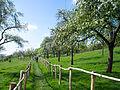 Walk in Spring (14499661961).jpg
