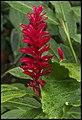 Walk through Singapore Botanic Gardens-38 (15581782564).jpg