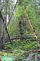 Wapta Falls Trail IMG 4949.JPG