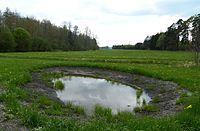 Wasserloch im Dinkelscherbener Moor.jpg