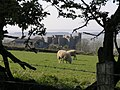 Weobley Castle - geograph.org.uk - 1261142.jpg