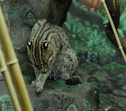Wet Fishing Cat.jpg