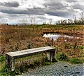 Wetlands bench PHOTO CREDIT darkchild69 (16750580946).jpg