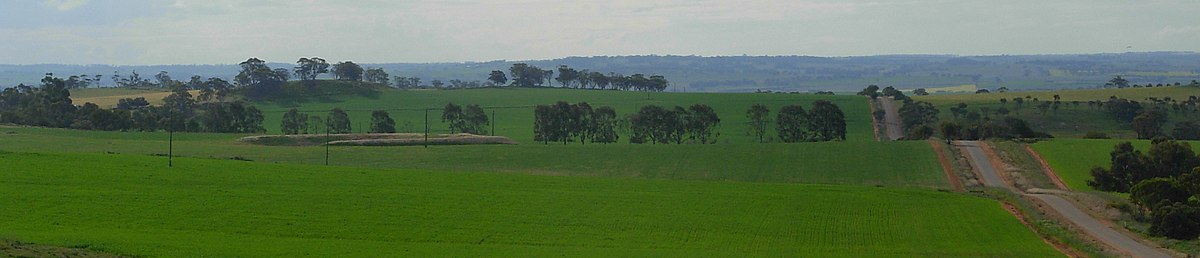 Wheat growing north-east of Northam Wheatbelt panorama-2.JPG
