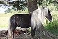 Wild Stallion posing (7414284236) (2).jpg