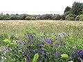 Wildflowers at Samsonagh - geograph.org.uk - 487408.jpg