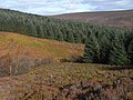 William's Cleugh, West Kielder Moor - geograph.org.uk - 1546556.jpg