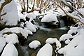 Winter in Merritts Creek, Kosciuszko National Park.jpg