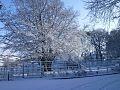 Winter tree at the community centre.jpg