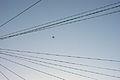 Wires (2358955506).jpg