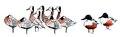 Witwangfluiteend Dendrocygna viduata Jos Zwarts 2.tif