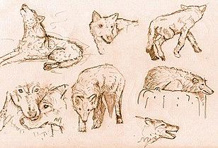 Wolfsvxd.jpg