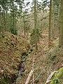 Wooded Stream - geograph.org.uk - 728164.jpg