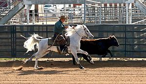 Working cow horse - An Arabian horse competing in working cow horse competition