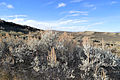 Wyoming Sagebrush (15560437116).jpg