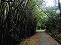 Yamabushi-Toge Sekibutsu 山伏峠石仏(兵庫県加西市玉野町) DSCF1429.JPG