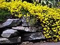 Yellow (4546260795).jpg