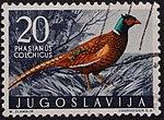 Yugoslavian stamp with Phasianus colchicus 1958.jpg