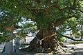 Zentsu-ji in Zentsu-ji City Kagawa pref45n4592.jpg