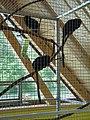 Zoo Tábor-Větrovy, tamarín 02.jpg