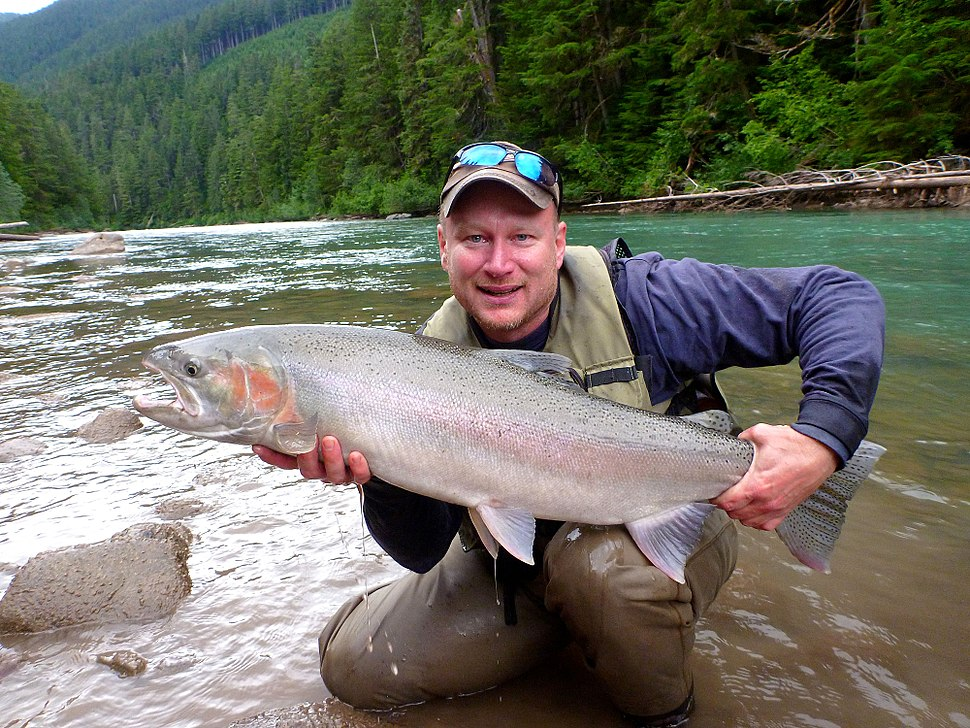 Zymoetz (Copper) River Steelhead