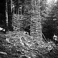 """""""Apnenca"""" v gozdu v Gorenjih Novakih 1954.jpg"""