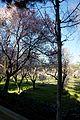 ®s K3 SD ┼ MADRID KATRESYA PQUE. QUINTA de los MOLINOS - panoramio (2).jpg