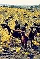 Ávila (provincia) 1982 03.jpg