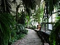 Łańcut Palace - botanical garden.JPG