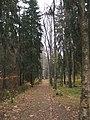 Берёзовая аллея в парке Репина.jpg