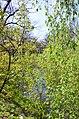 Дубовий гай з природною водоймою в Києві. Фото 4.jpg