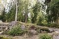Естественный рельеф парка Монрепо.jpg