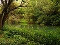 Зелено спокойствие - река Златна панега.JPG