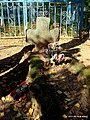 Каменный крест на Экиманьском кладбище - panoramio.jpg
