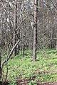 Лесной участок Веневитиново 11.jpg